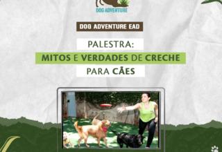 Mitos e Verdades sobre Creche para Cães