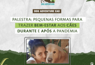 Pequenas formas de trazer bem-estar aos cães durante, e após, a pandemia